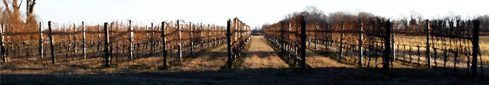 Vines, Orient